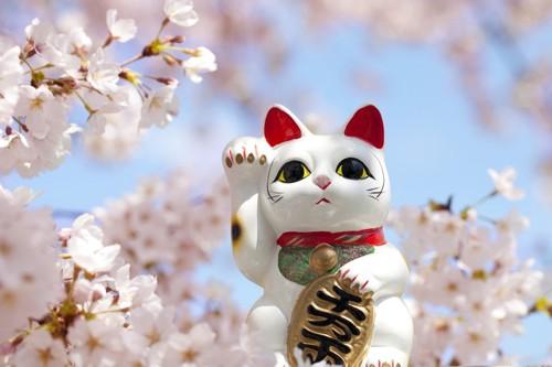 桜の木と招き猫