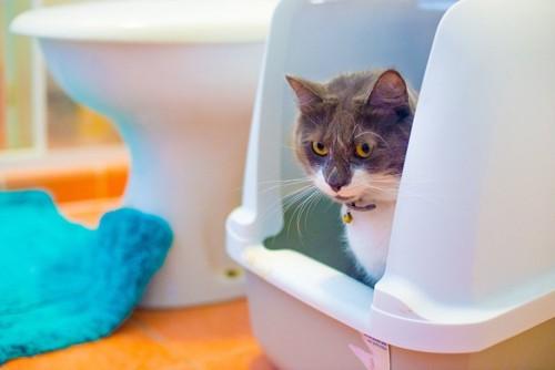 人間のトイレの横で排泄する猫