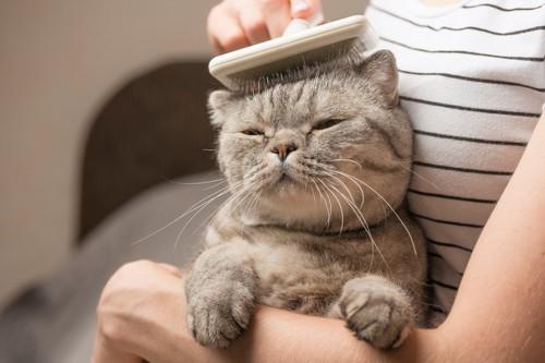 飼い主に抱っこされてブラッシングされる猫