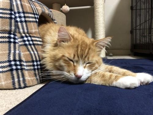 安らかに眠る猫