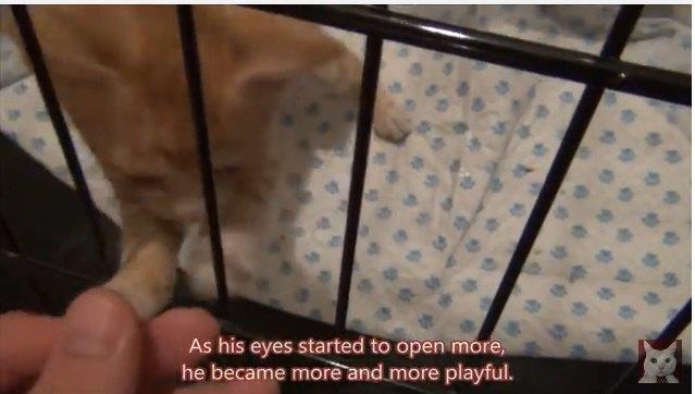 ケージごしの子猫