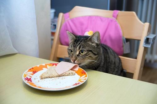 テーブルの上に置かれた食事を食べようとする猫