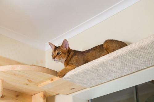 キャットウォークの上にいる猫