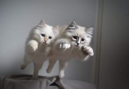 揃って飛ぶ猫