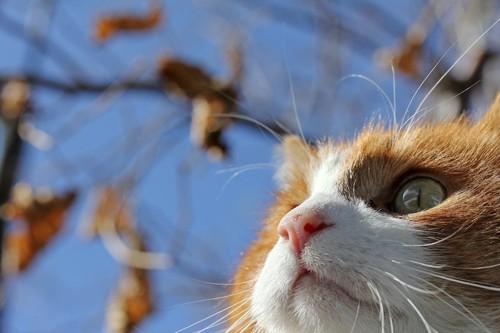 空を見上げる猫の顏アップ