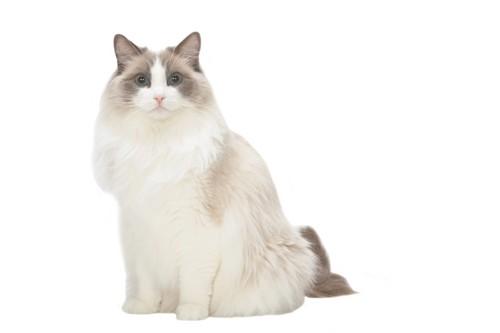 毛の長い猫