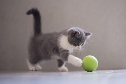 前足でボールを突く子猫