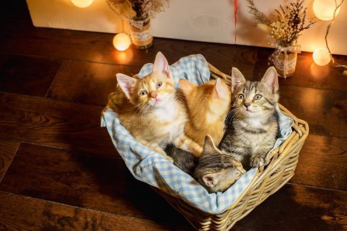 バスケットの中にいる子猫たち