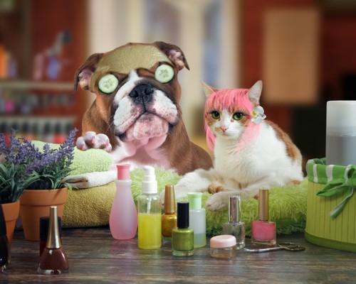 お化粧した犬と猫