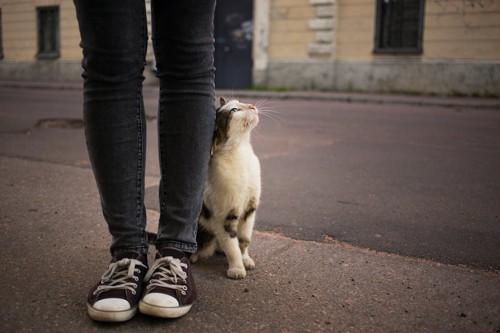立っている人の足にスリスリする猫