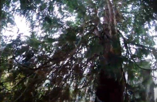 エリオットが立ち往生している木