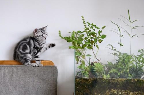 植物に興味を持つ猫