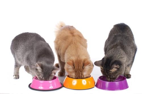 並んで餌を食べている3匹の猫