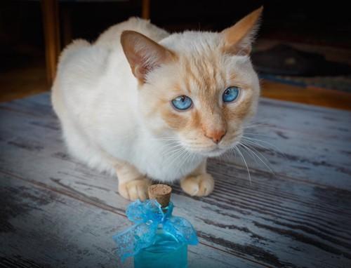 香水の瓶と青い瞳の猫