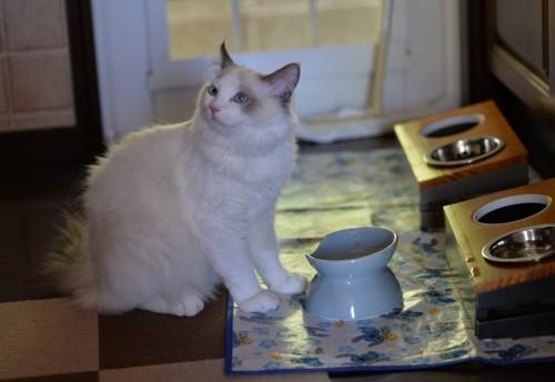 青い食器と猫