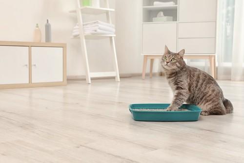 緑色の猫トイレに手を入れるキジトラ