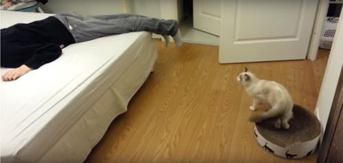 動き出す猫