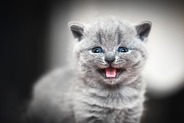 背景黒く鳴く子猫