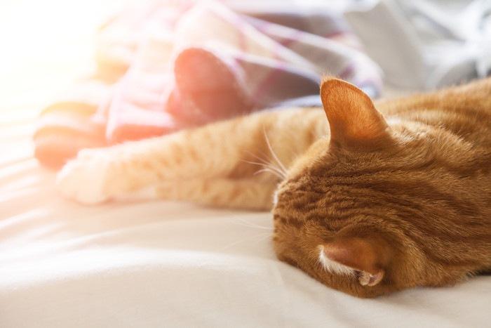 寝て手を伸ばす茶トラ猫