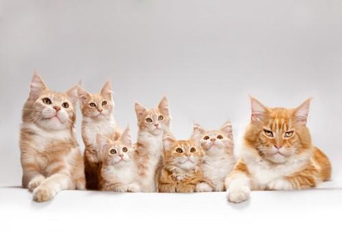 もふもふの猫親子達