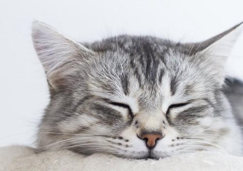 眠っている猫の顔