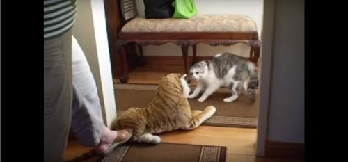 威嚇をしながら後退る猫