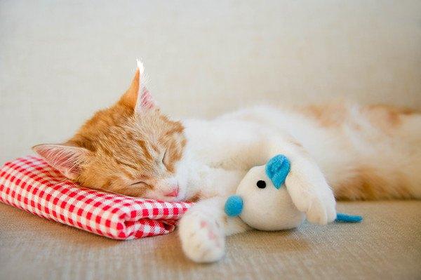 青と白のぬいぐるみと寝る猫