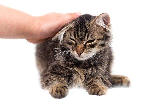 ナデナデされる猫