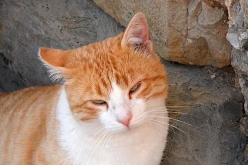 眩しそうに目を細めている猫