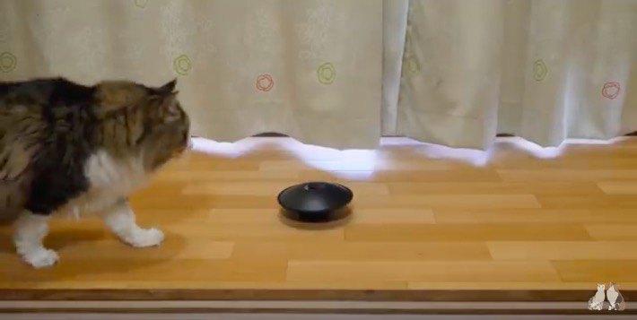 ルンルンで近づく猫