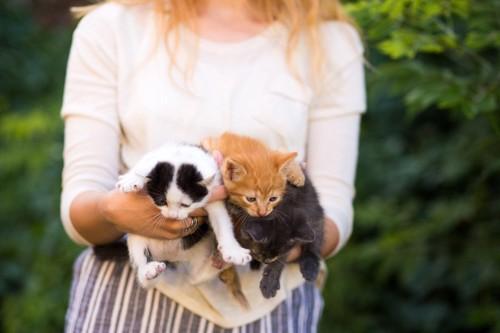 抱っこされる三匹の猫
