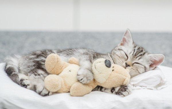 ぬいぐるみを抱いて横向きに眠る子猫