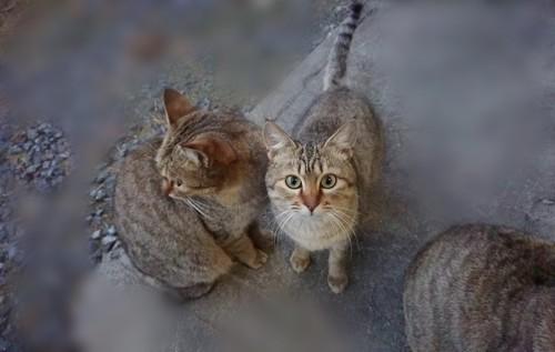 三匹の猫1番右端の猫がカメラを向いている