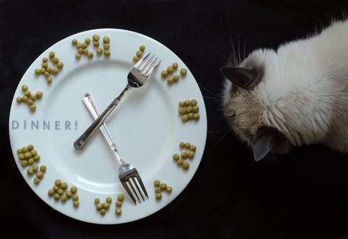 お皿で作った時計を見る猫