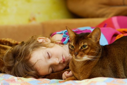 眠っている女の子の隣でくつろぐ猫