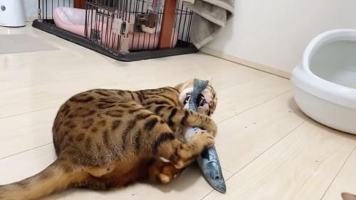 おもちゃに噛み付く猫
