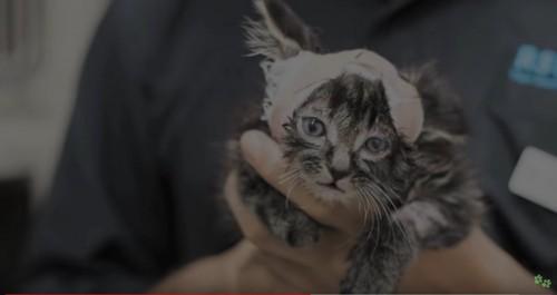 手に乗る大きさの猫