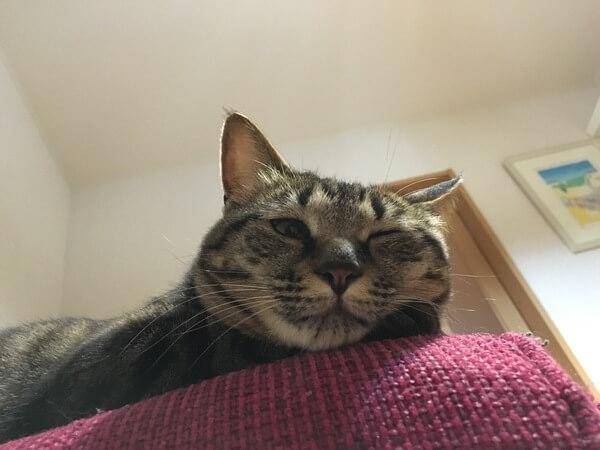 猫のあるある行動:甘えん坊猫