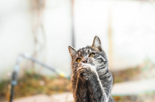 お祈り中の猫