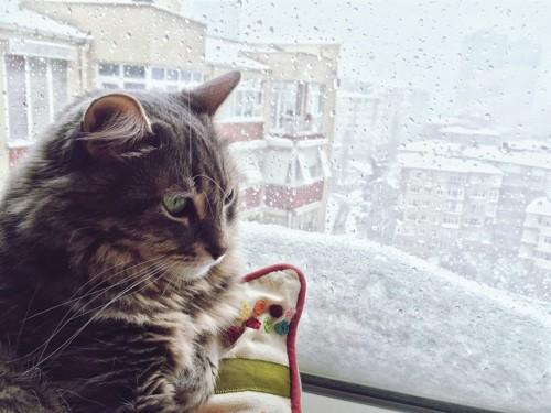 ゆううつそうな猫