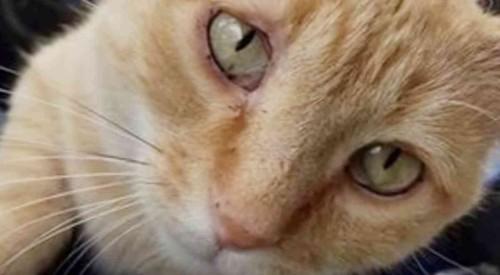 チャトラ猫顔のアップ
