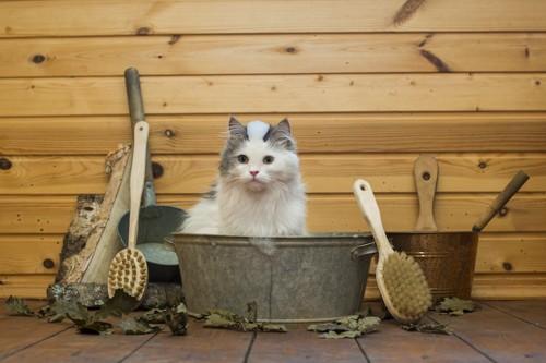 桶に入っている猫とブラシ