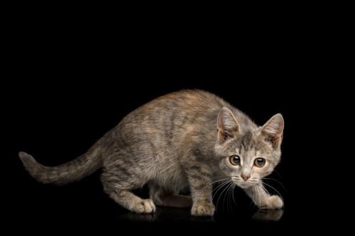 不信感を抱く猫
