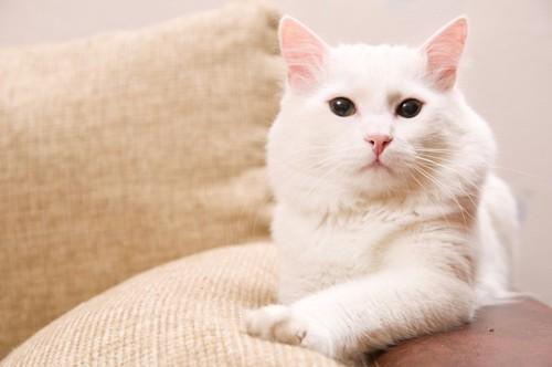 片足を伸ばす猫