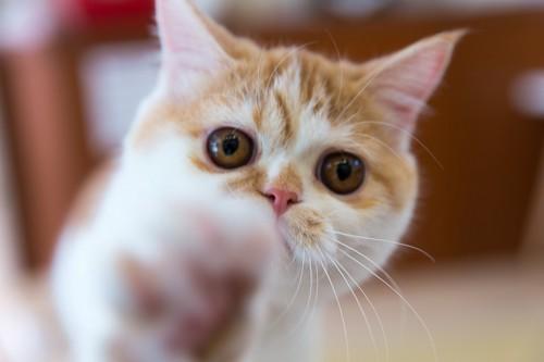 カメラに手を伸ばしている猫