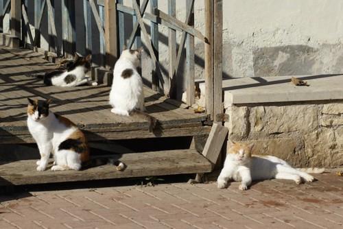 少し距離をとって集まる猫たち