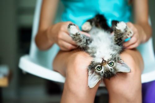 女性の足の間にいる子猫