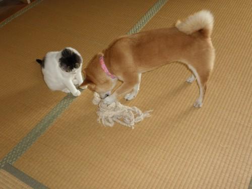 #犬と仲良し#