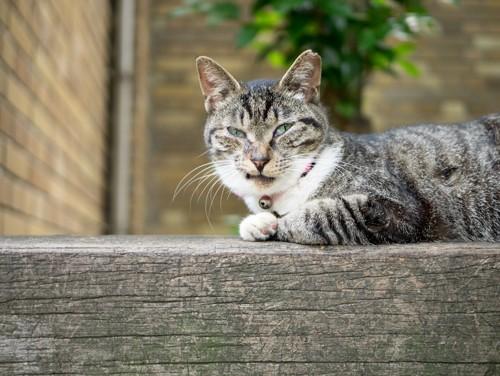 微妙な表情の猫