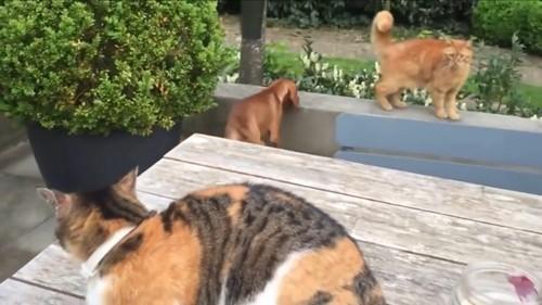 猫2匹と犬1匹